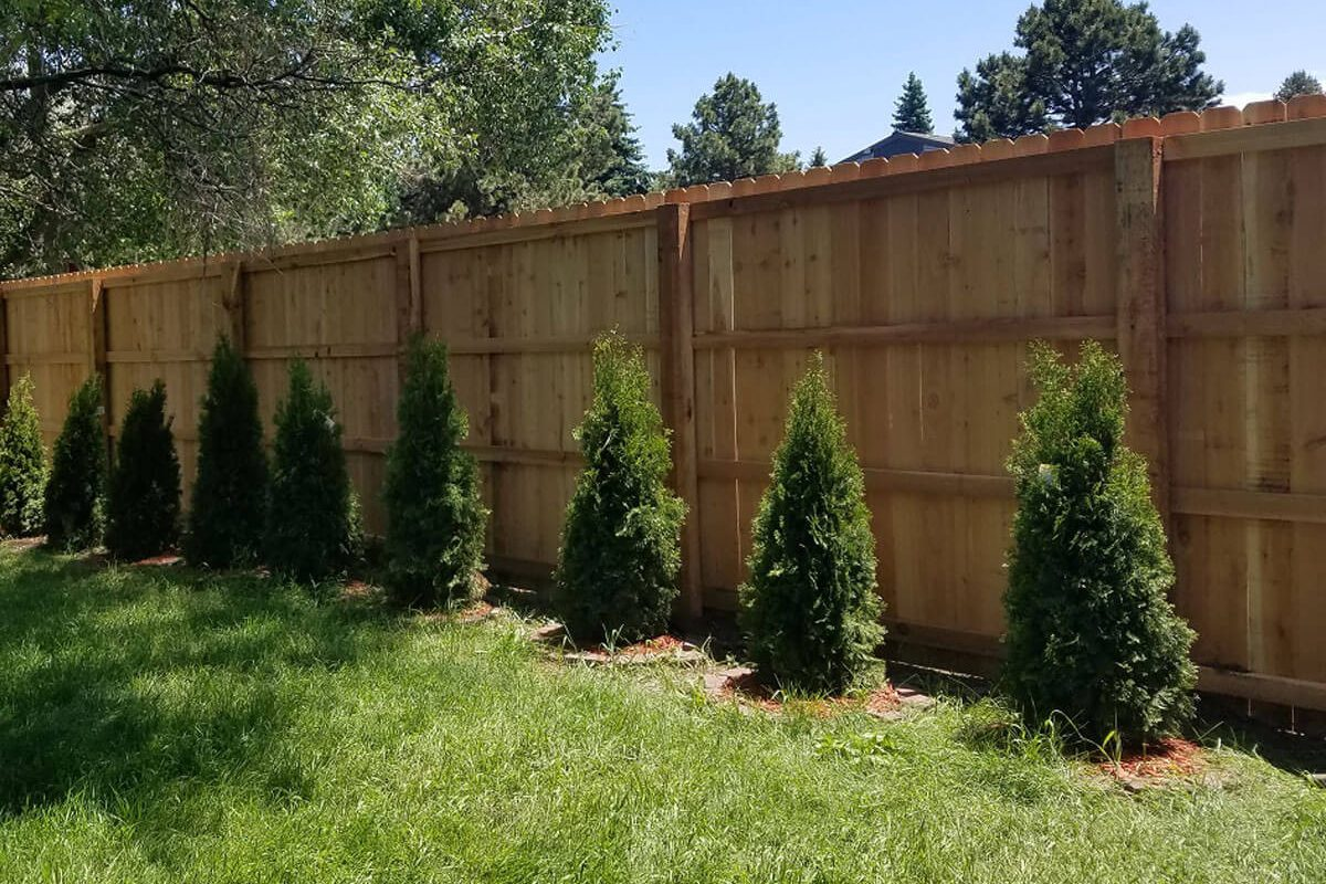 Denver-Wood-Fence-Trees